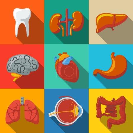 Illustration pour Organes humains internes longues icônes plates d'ombre réglées avec le cœur et le cerveau, les poumons, le foie, les reins, l'intestin, les yeux, les dents, l'estomac. Illustration vectorielle - image libre de droit