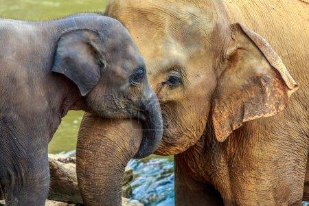 Photo pour Câlins éléphant et éléphanteau - image libre de droit