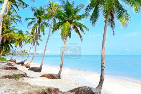 Photo pour Tropical beach with coconut palm trees and white sand - image libre de droit