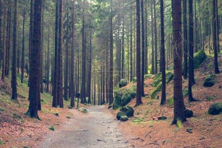 Walking paths among trees
