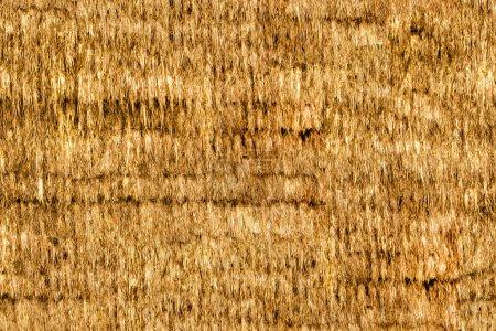 Textura sin costura de paja