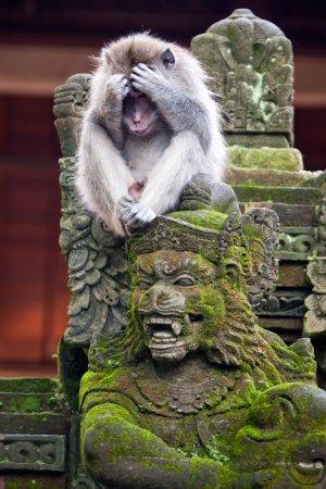 Monkey on a stone sculpture