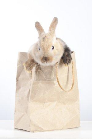 Rabbit in a paper bag