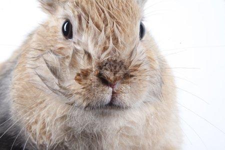 Bunny rabbit on white