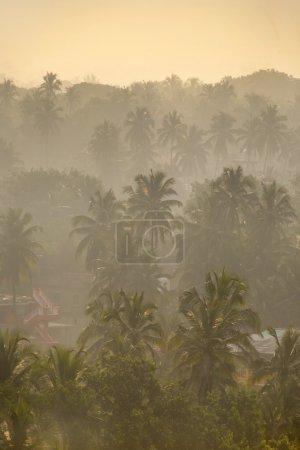 Morning rain jungle