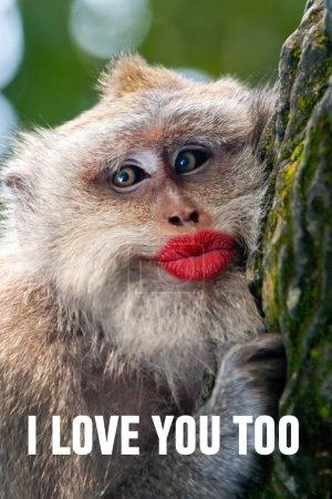 Photo pour Singe drôle avec de grandes lèvres rouges et des mots : Je t'aime aussi - image libre de droit