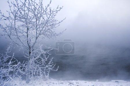 Photo pour Arbres d'hiver dans le gel et le brouillard - image libre de droit