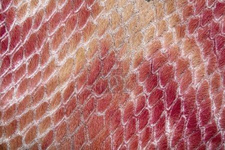 textura de la piel del reptil