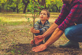 boy helping father to plant the tree