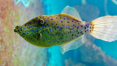 Fish that live in the Red Sea
