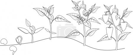 Pepper growing stage. Coloring