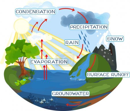 Illustration for The water cycle in nature - Royalty Free Image