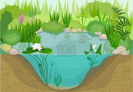 Ecosystem of duck pond...