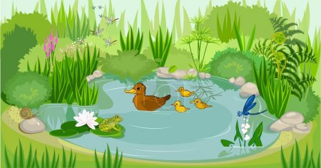 Duck pond with duck and ducklings...