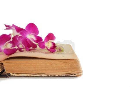 Photo pour Isoler les vieux livre et orchidée sur fond blanc - image libre de droit