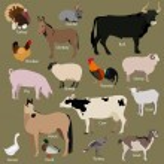 Set of farm animals icons. Flat style design. Vect...