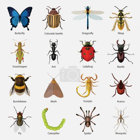 Illustration for Set of insects flat style design icons on gray background - Royalty Free Image