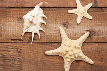 Seashell and starfishes on wooden table