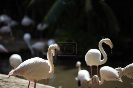 flamingos in zoo of South Africa