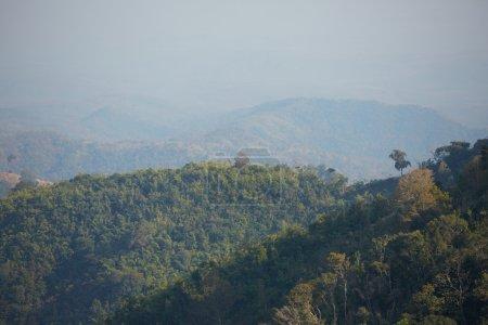 trees on mountain slopes