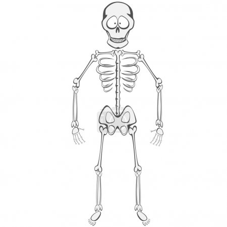 Illustration for A funny skeleton mascot standing and smiling - Royalty Free Image