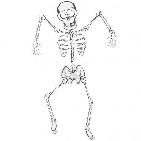 Illustration for A funny skeleton is walking towards you like a zombie - Royalty Free Image