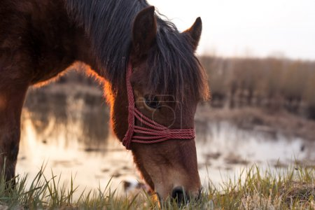 Horse grazing on pasture near the swamp