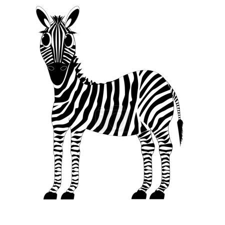 Animal zebra, horse