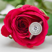 Diamond Halo Ring Held within Scarlet Red Rose