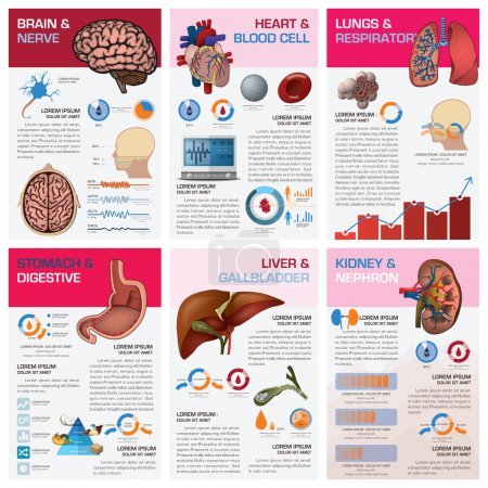 Illustration for Internal Human Organ Health And Medical Chart Diagram Infographic Design Template - Royalty Free Image