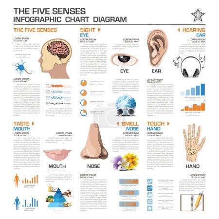 The Five Senses Infographic Chart Diagram