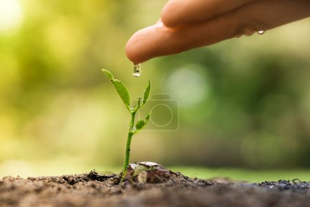 hand nurturing and watering a young plant