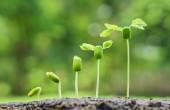 Stromy rostoucí na úrodné půdě