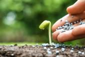 Ruka zemědělce hnojivo dát mladých zelených rostlin