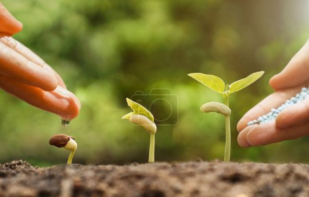 hands watering young baby plants