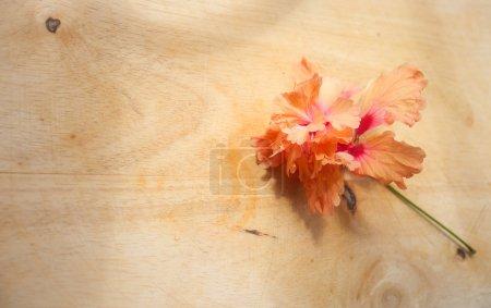 flower on wooden background