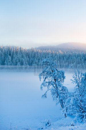 Snowy pine trees with fog on a winter landscape.