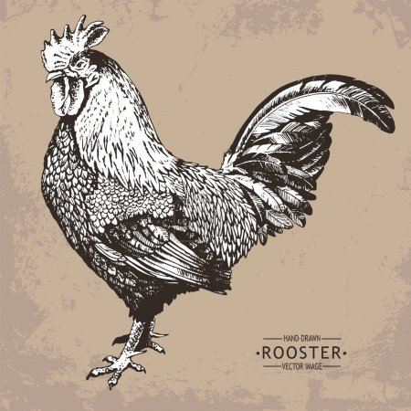 hand-drawn vector vintage style rooster