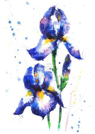 Watercolor hand-drawn iris flowers