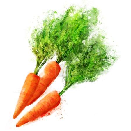 Illustration pour Set de légumes vecteurs : carottes sur blanc - image libre de droit