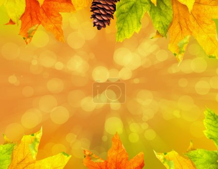 autumn maple leaves with copy space