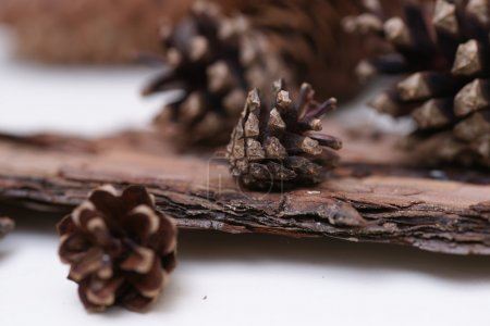 spruce and pine cones