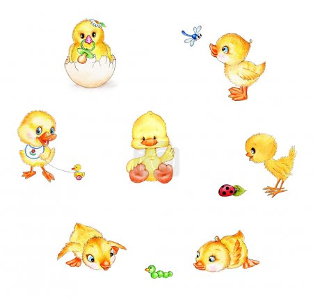 Set of cute chicks