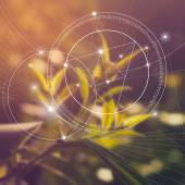 Sacred geometry. Mathematics, nature, and spirituality in nature. The formula of nature. There is no beginning and no end of the Universe, and no beginning and no end of the Life.