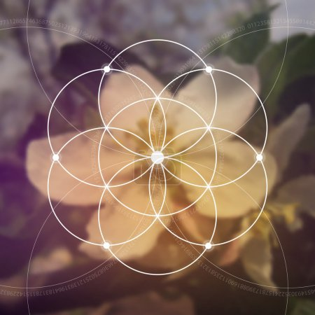Flower of life - the interlocking circles ancient symbol. Sacred geometry. Mathematics, nature, and spirituality in nature. Fibonacci row. The formula of nature.