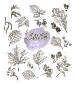Collection of highly detailed hand drawn leaves and inflorescence  isolated on white background