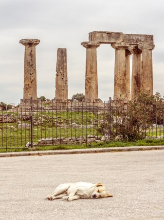 Sleeping dog in front of the Temple of Apollo in A...