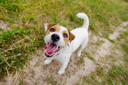 Cute barking dog