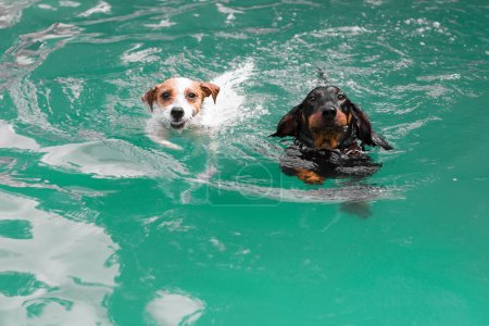 Two cute funny dogs swimming