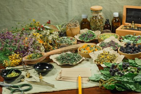 Photo pour Définir des herbes curatives. Herbes séchées pour une utilisation en médecine alternative. Médecine à base de plantes, phytothérapie herbes médicinales. Pour la préparation d'infusions, décoctions, teintures, poudres, onguents, thé . - image libre de droit